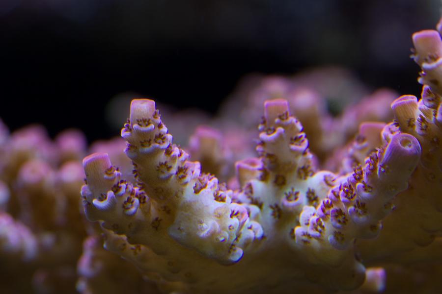 120312-A-hyacinthus-1.jpg